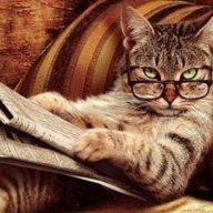 gattosofia